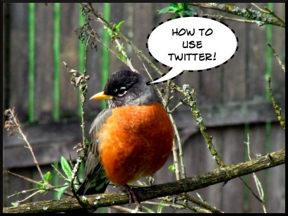 twitter, how to use twitter, robin